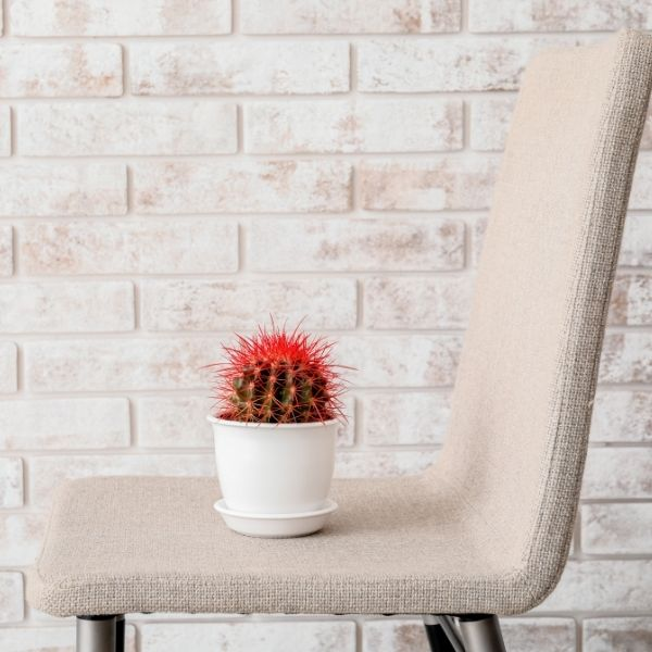 cactus on the chair